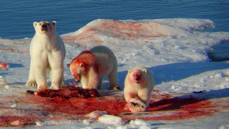 De IJsberenparade